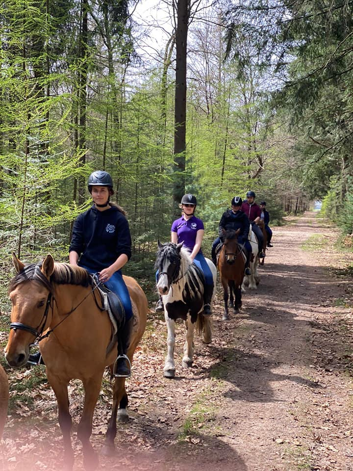 Trailride at Gasselte